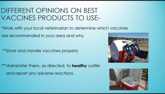 Vaccination Protocols and Best Management Practices in Beef Cattle