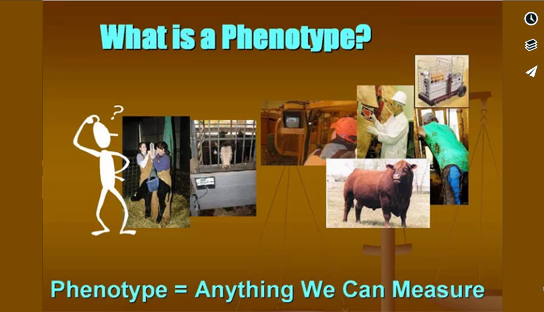 From Phenotypes to EPDs The Genetic Model
