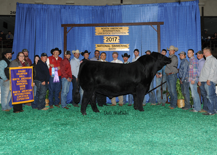 Purebred Simmental Bull of the Year, CMFM Crossroads 224C