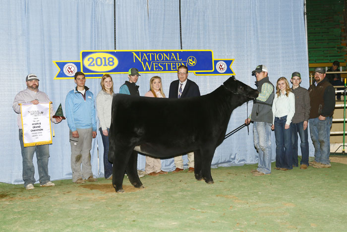 Purebred Simmental Female of the Year, PEINE/GS Rosie 677D