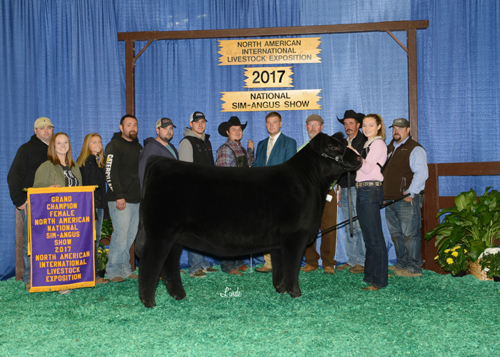 Percentage Simmental Female Of The Year, SJW Arkdale Pride 678D